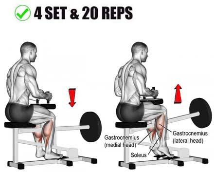 How to Rises Calf Seated.jpg