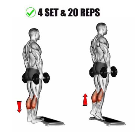 How to Standing Calf Raise With Dumbbells