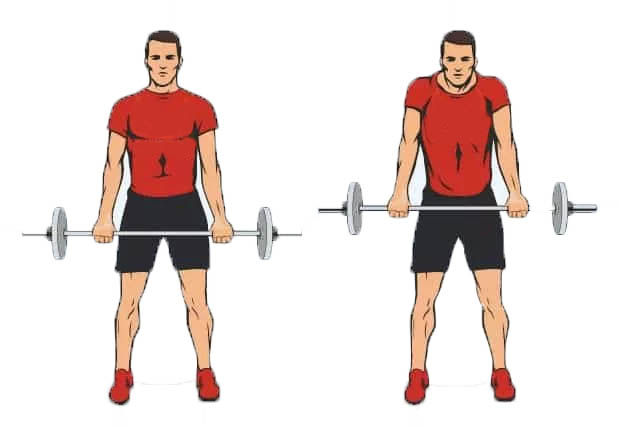 Barbell shrug - One Best Trap Exercises