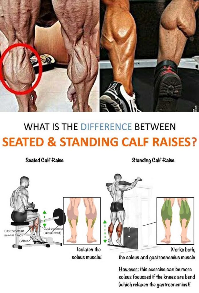 Sanding Calf Raise vs. Seated Calf Raises