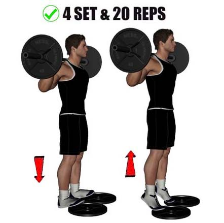 How to stand calf raise with barbell