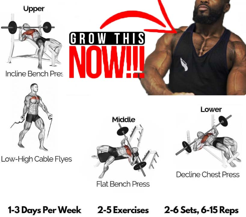 chest press guide