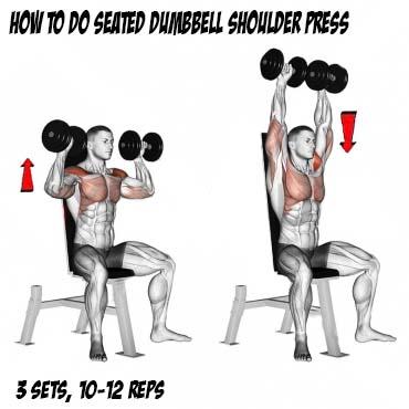 seated dumbbell shoulder press exercises