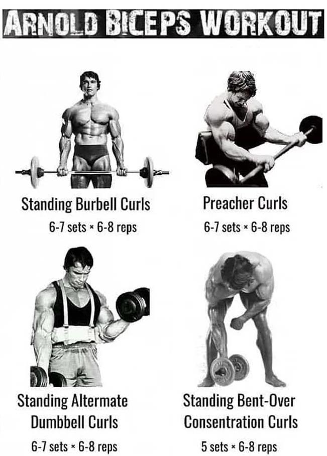 Biceps Routine from Arnold Schwarzenegger