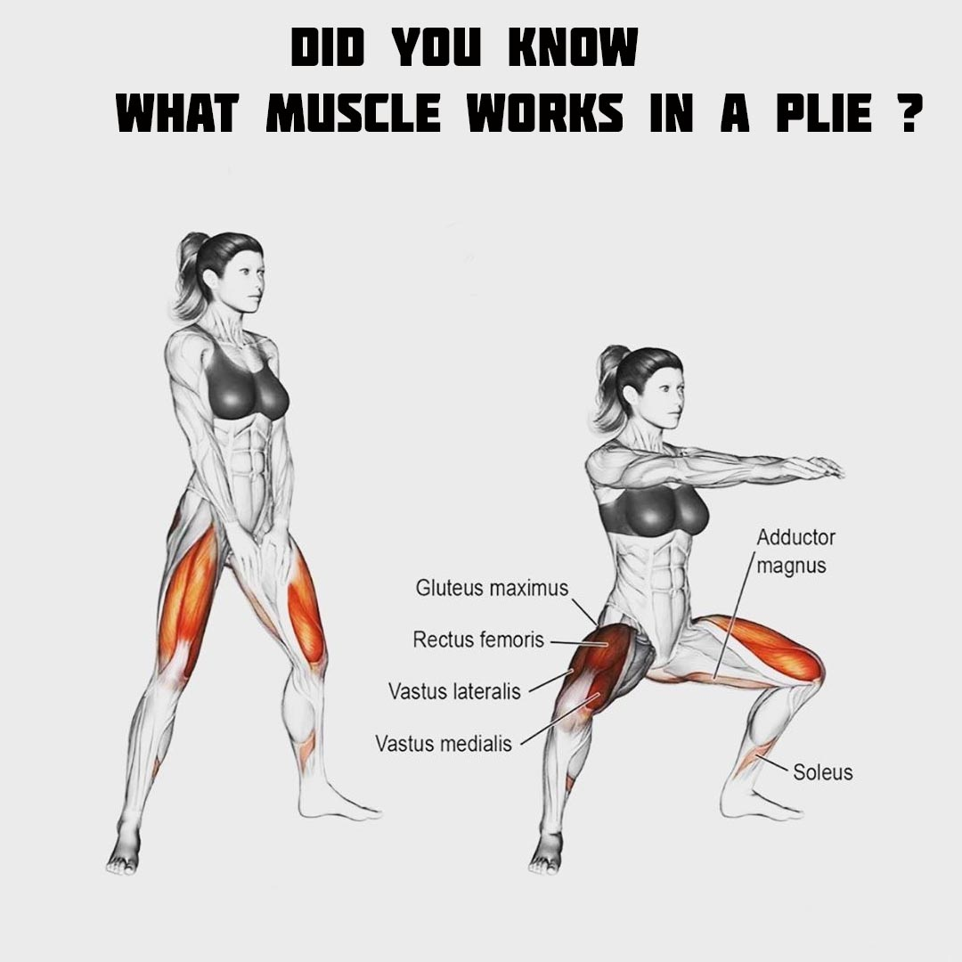 Muscle work in a Plie?