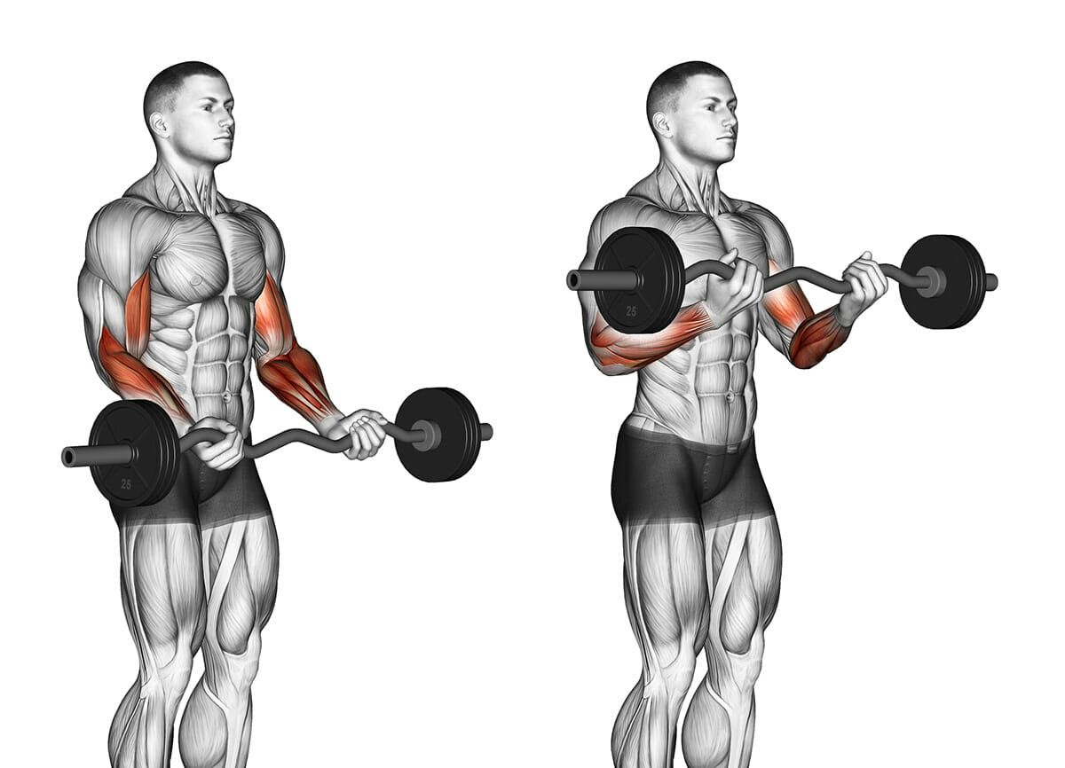 Biceps Curl Z-Bar