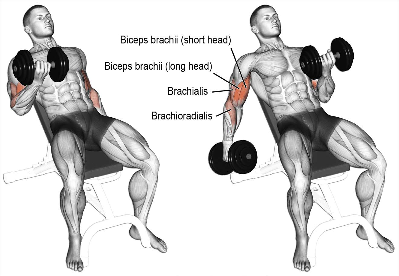 How to Do Incline Dumbbell Сurl