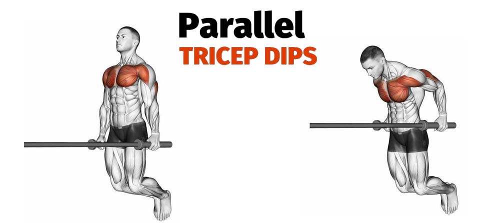 How to Parallel Bar Dips