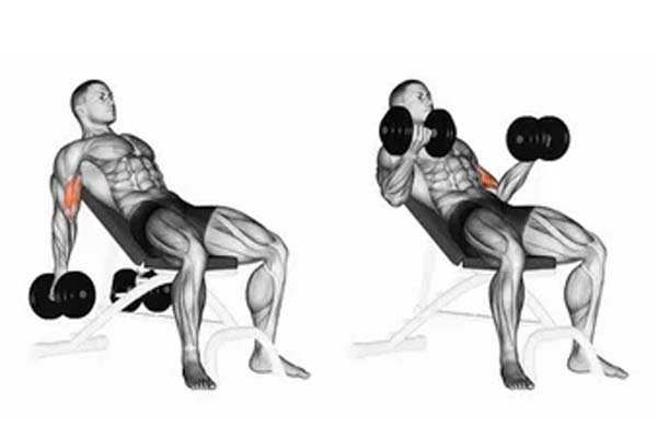 How to Do Seated Biceps Curl