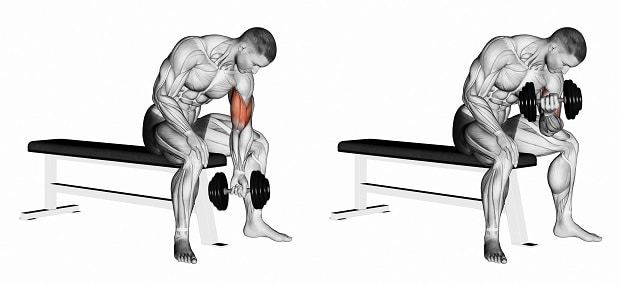 How to Do Seated Dumbbell Concentration Curls