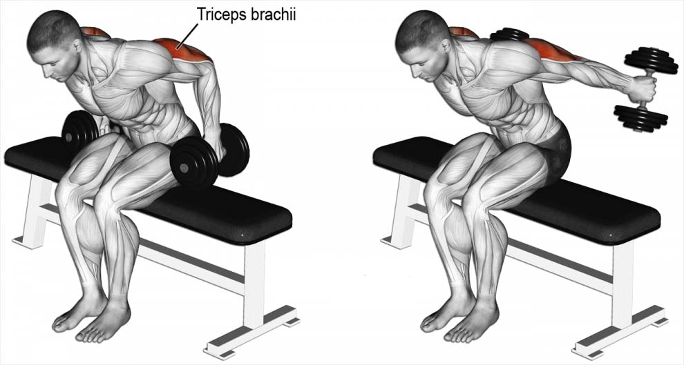 How to Do Seated Bent-Over Two-Arm Dumbbell Kickback